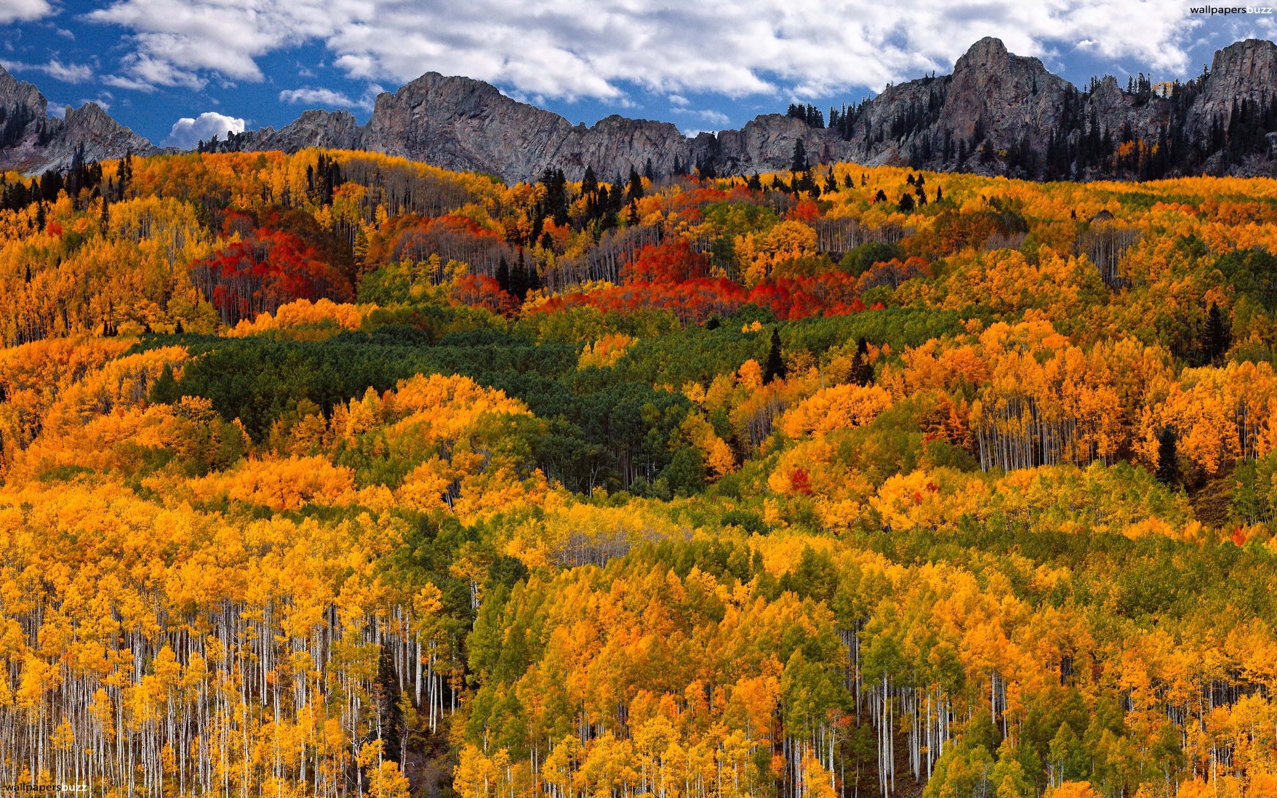 Colorful Fall In Mountains HD Wallpaper