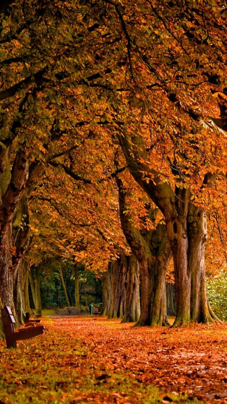 17 Best Images About Fall IPhone Wallpaper On Pinterest