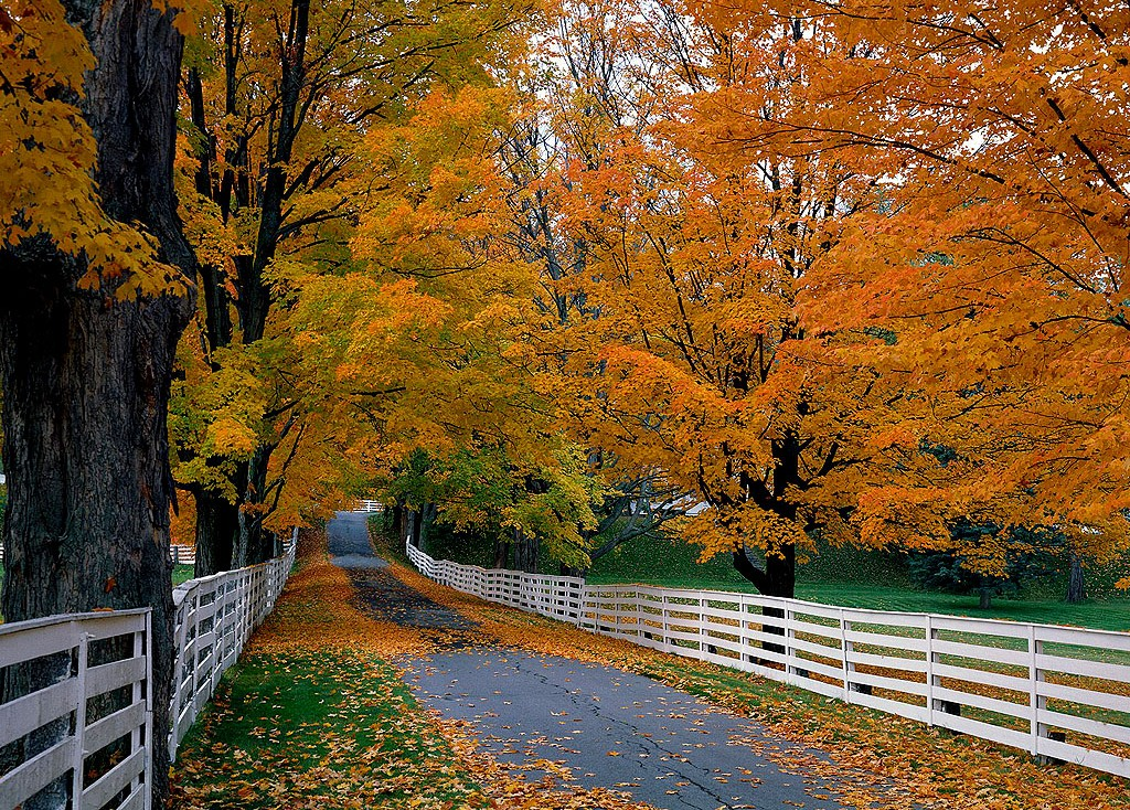 Collection of Fall Background Pictures on HDWallpapers