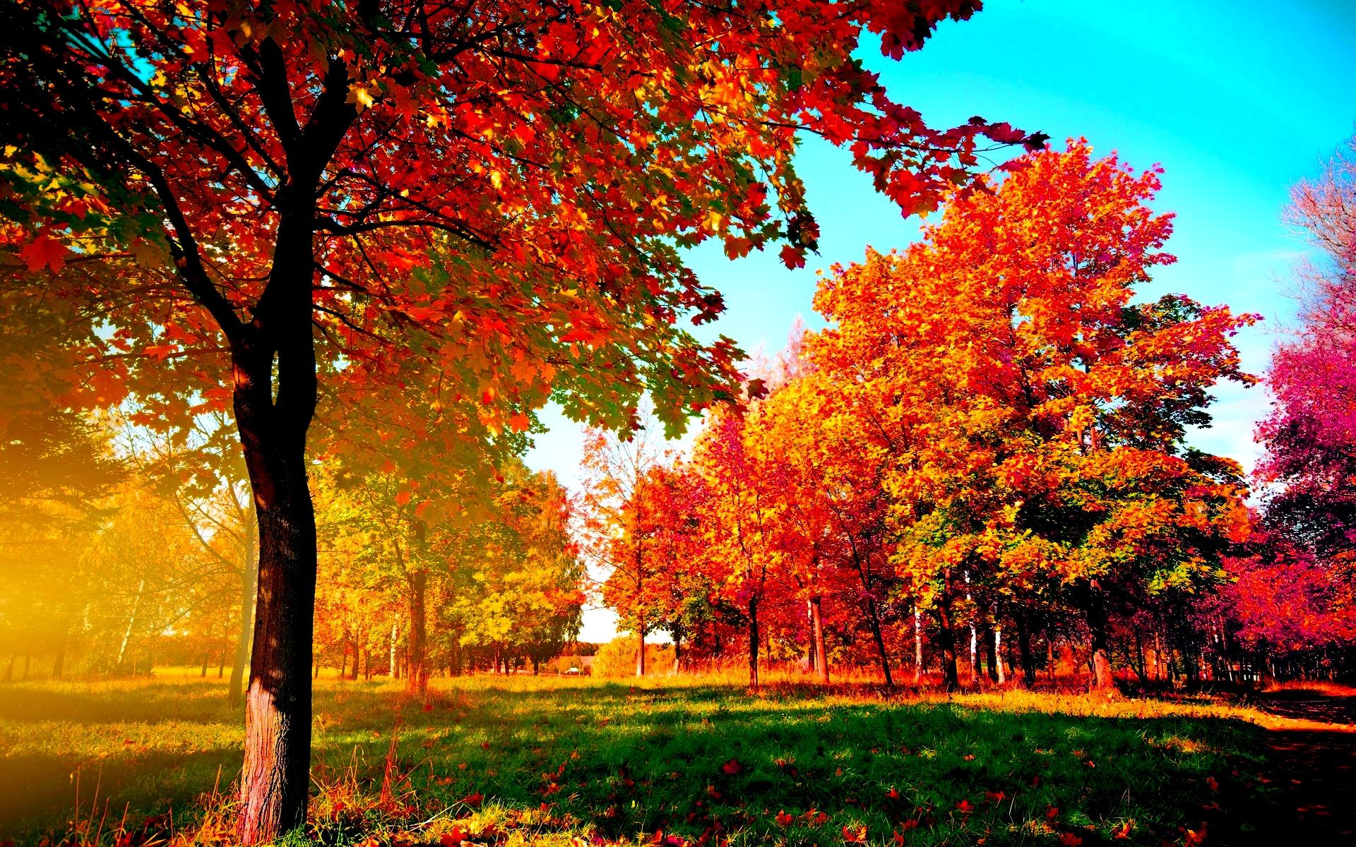 Fall Backgrounds Free Download | PixelsTalk Net