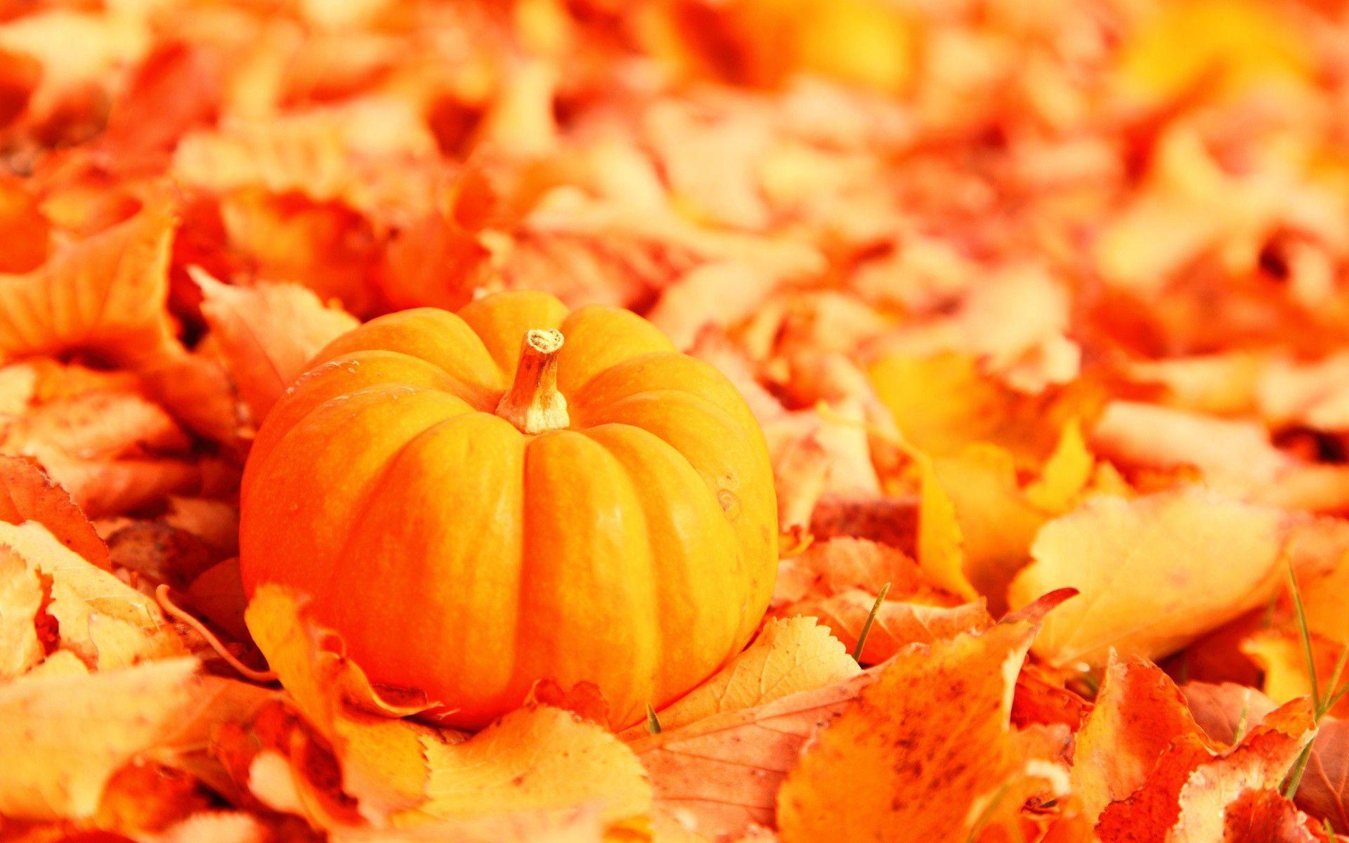 Free Pumpkin Wallpaper Backgrounds - Wallpaper Cave