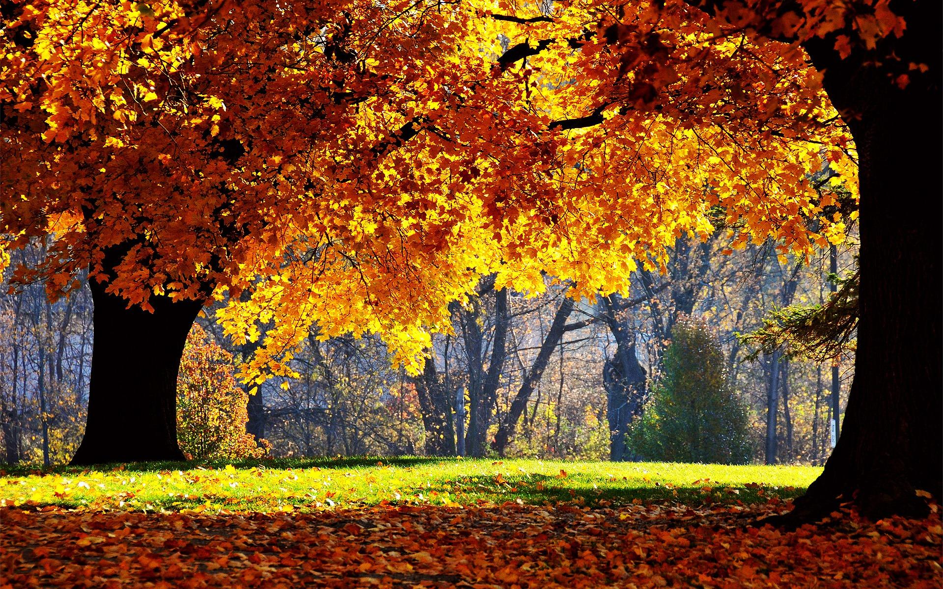 Fall Wallpapers Desktop | Luoghi da visitare | Pinterest | Fall