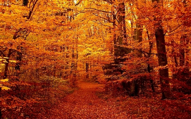 Desktop Fun: Colors of Autumn Wallpaper Collection