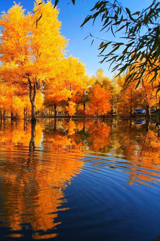 Fall Reflection Wallpaper | Fall Wallpaper! | Pinterest | Autumn