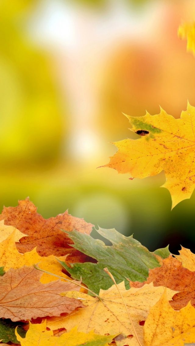 1000+ ideas about Autumn Iphone Wallpaper on Pinterest | Fall