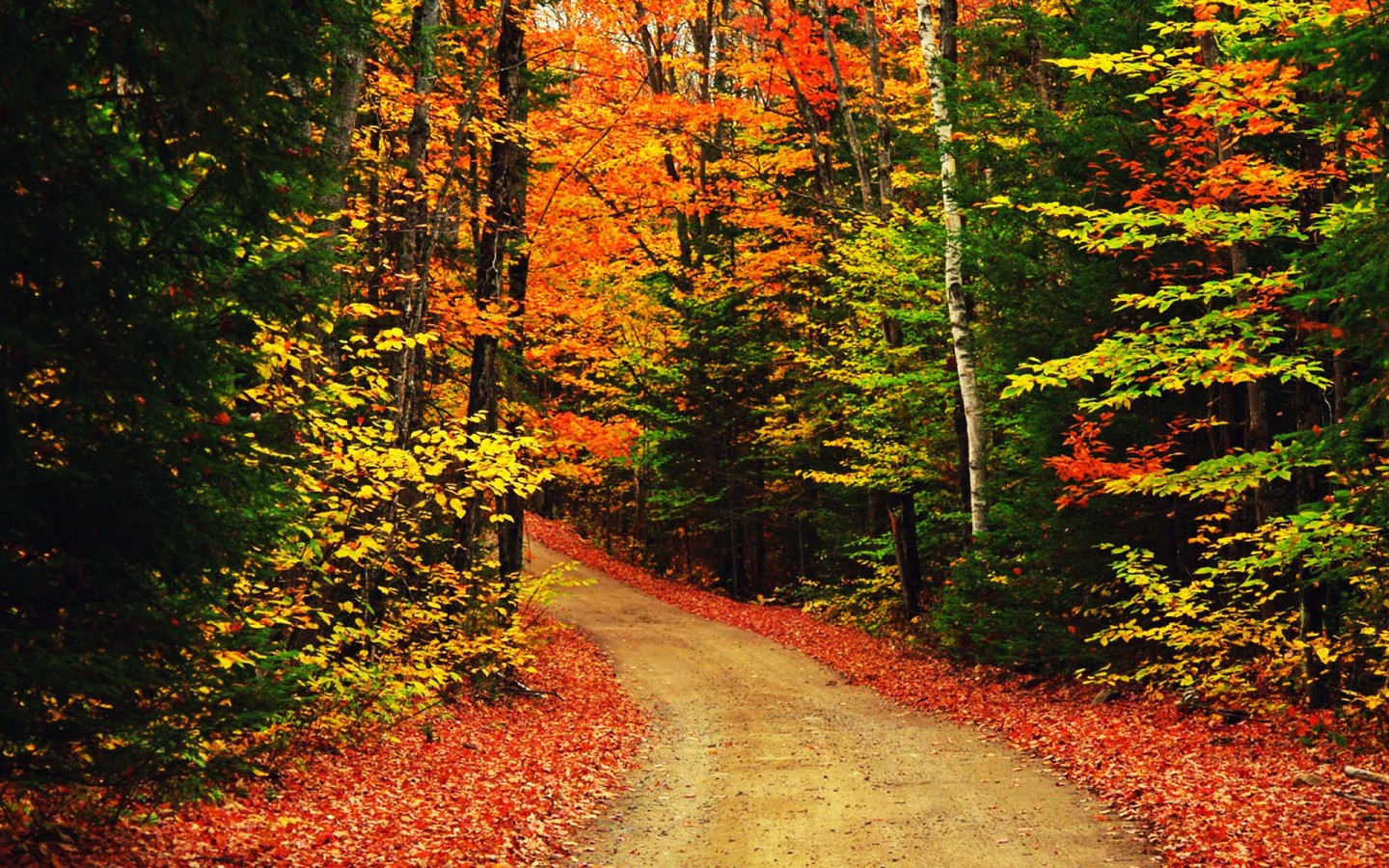 Fall Backgrounds Autumn Trees Wallpaper Opera Wallpapers