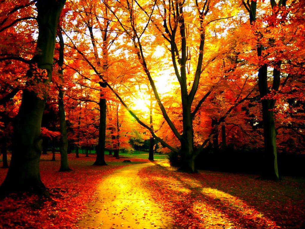 Fall Wallpaper Images - WallpaperSafari
