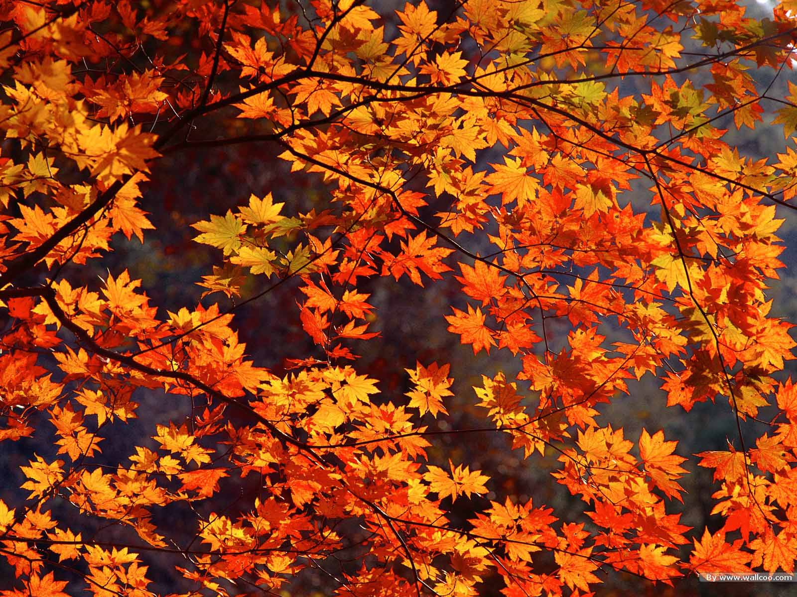 Free Autumn Wallpaper Backgrounds - Wallpaper Cave