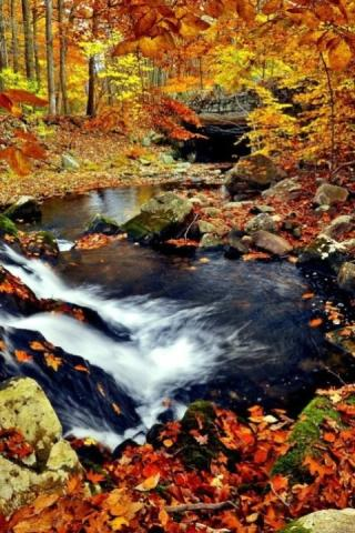 65 3d fall wallpaper Pictures
