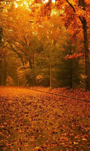 Autumn Wallpaper For Android Page 1