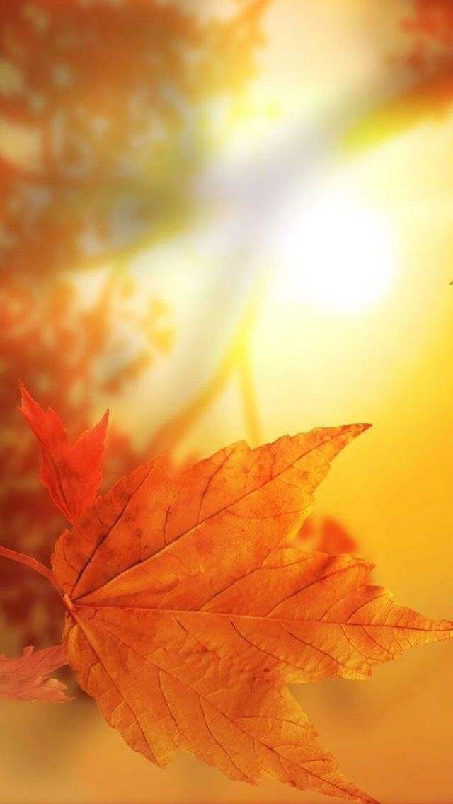 1000+ ideas about Iphone Wallpaper Fall on Pinterest | Fall