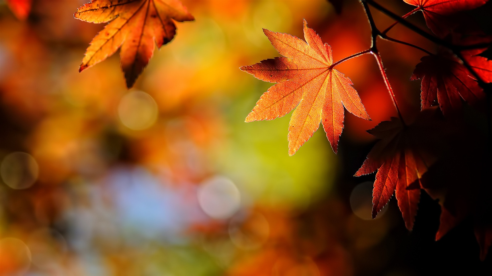 Fall Leaves Desktop Wallpapers 3992 - Amazing Wallpaperz