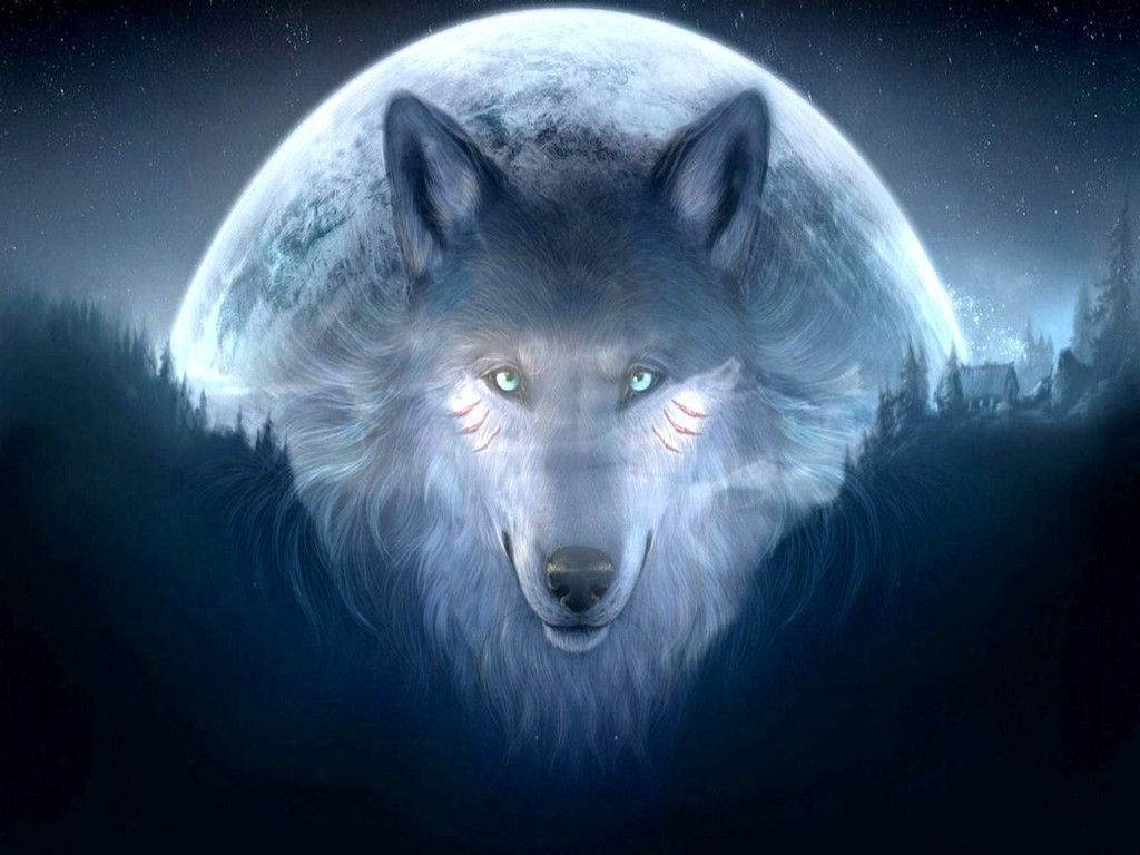 Wolf Wallpaper Free Download