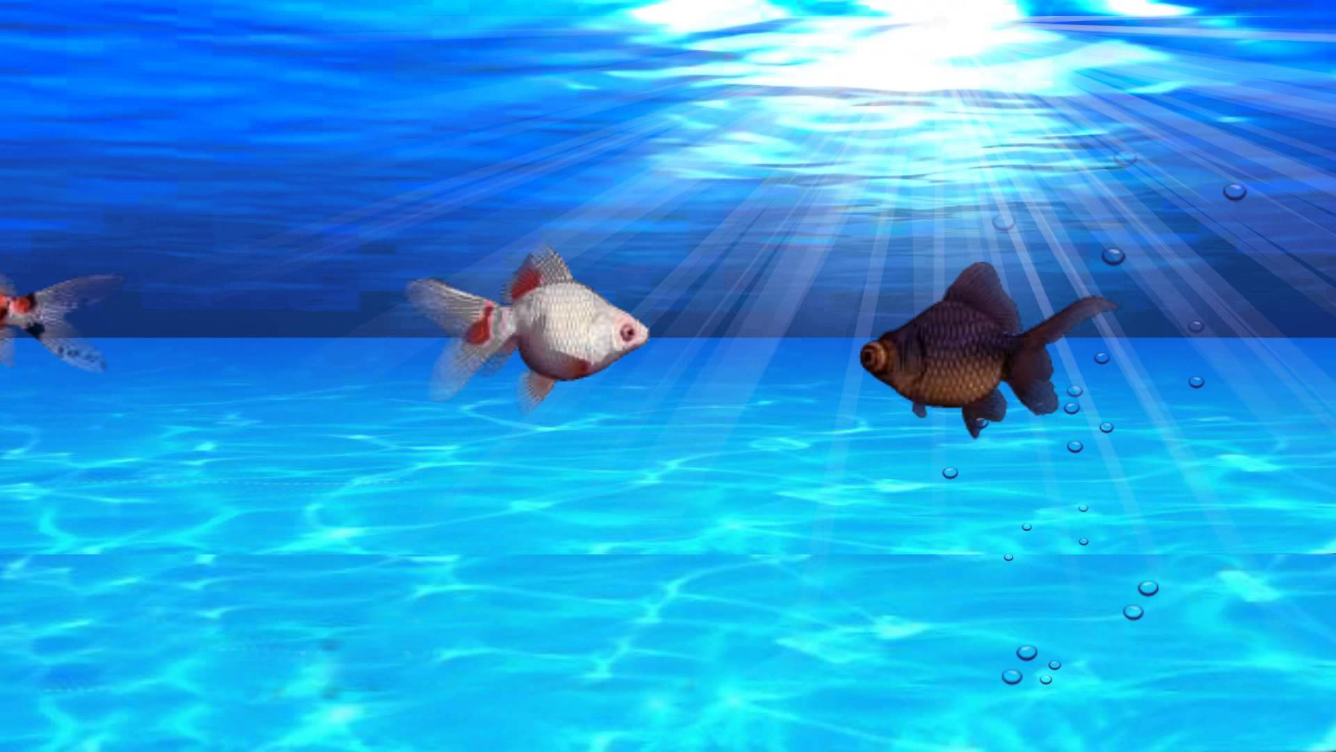 Fish Aquarium Video Background - YouTube