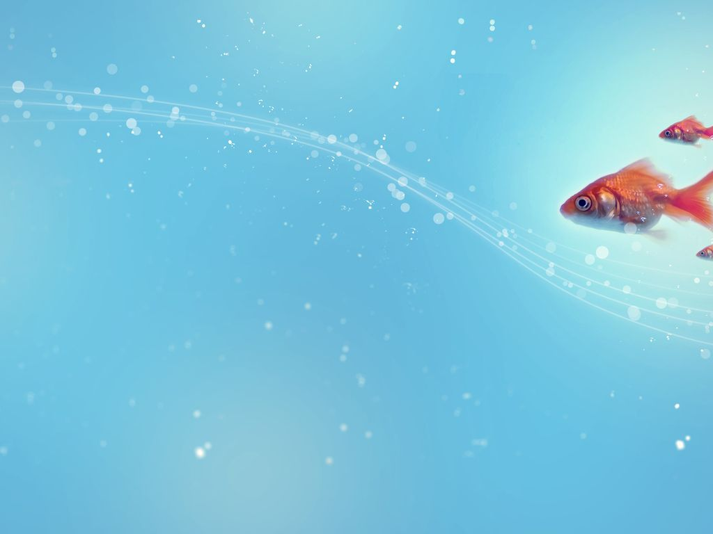 Fish Backgrounds - Wallpaper Cave