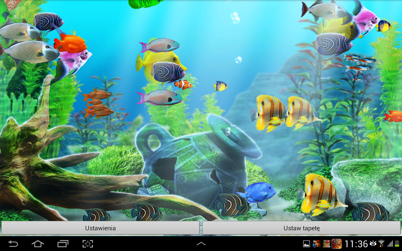 Google Aquarium   Fish Tank Wallpaper Hd Sf Wallpaper