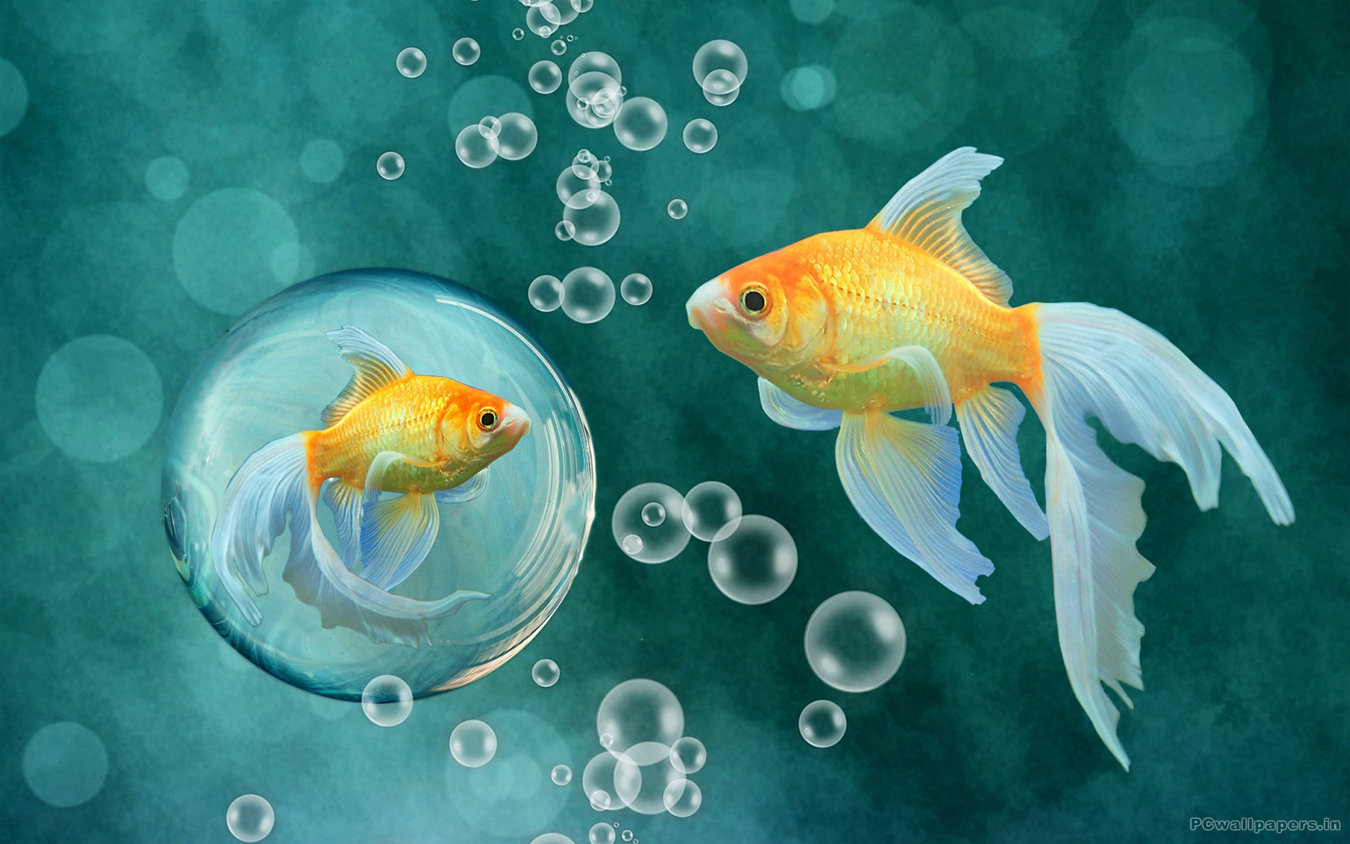 Beautiful Fish Wallpapers Free Download - HD Wallpapers Pop