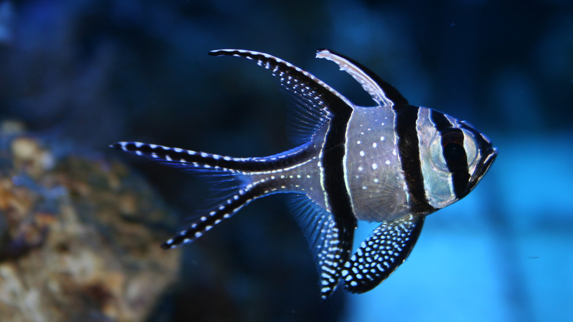 Beautiful Fish Photos Images And HD Wallpapers