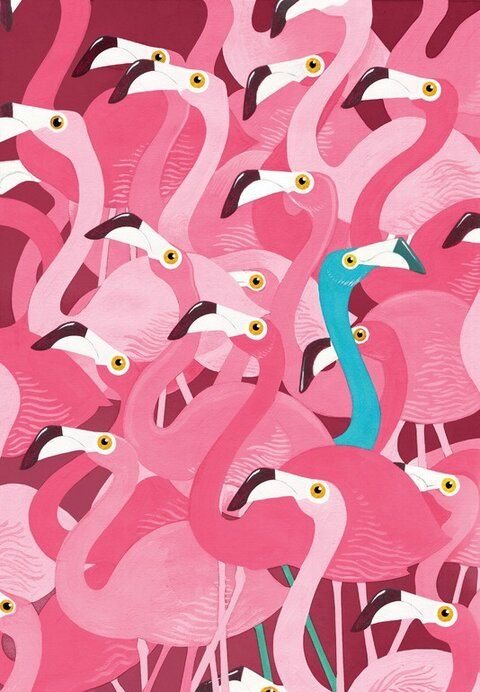 Collection of Flamingos Wallpaper on HDWallpapers