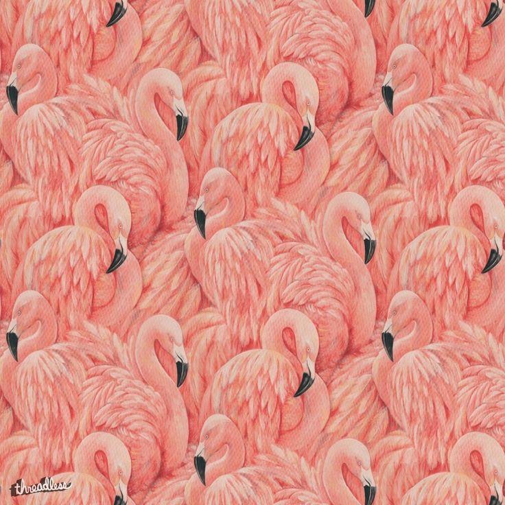1000+ ideas about Flamingo Wallpaper on Pinterest | Flamingo