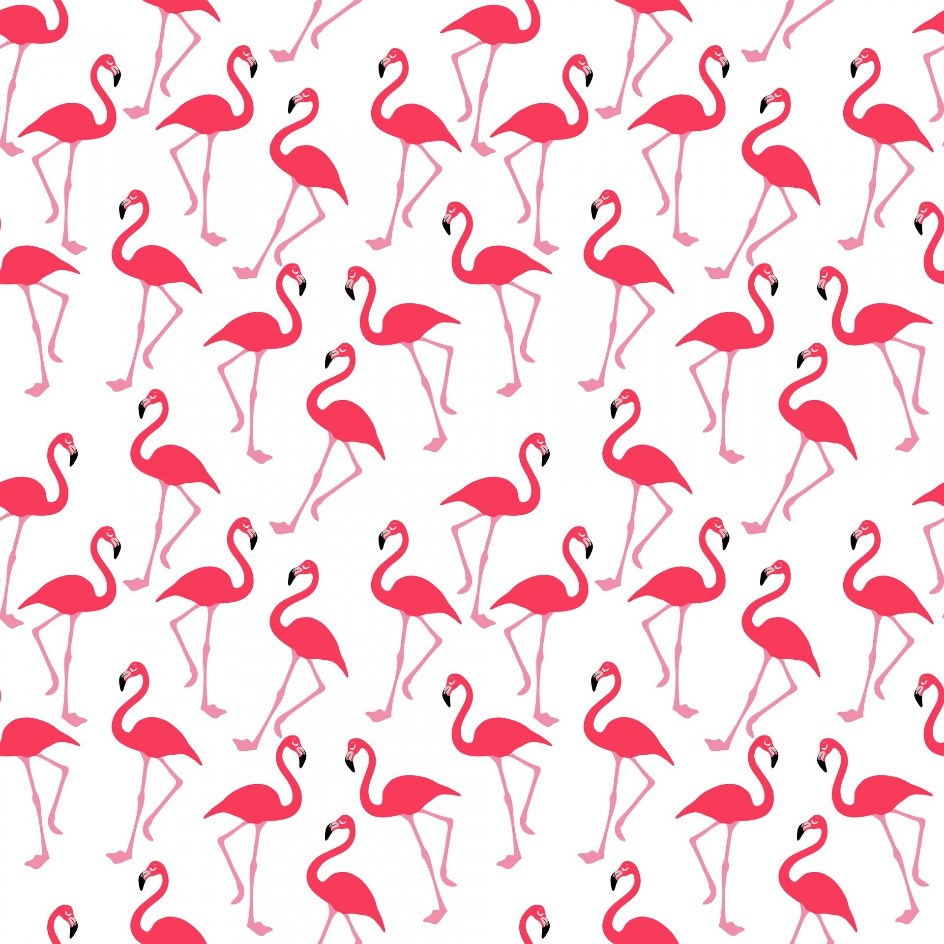 Flamingo Wallpaper Background Free Stock Photo - Public Domain