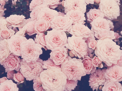 floral print background tumblr - Google Search | Flower