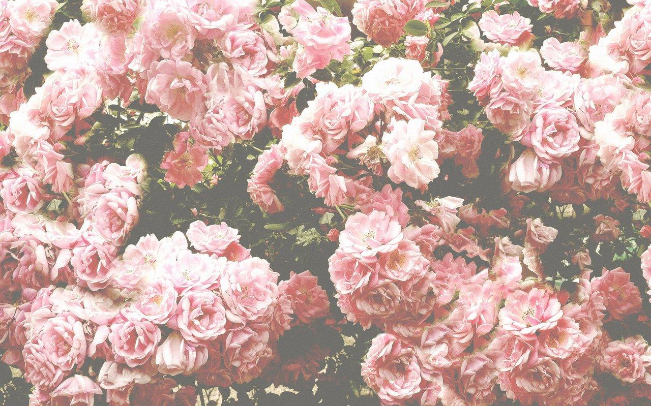 Floral Tumblr Wallpaper Sf Wallpaper