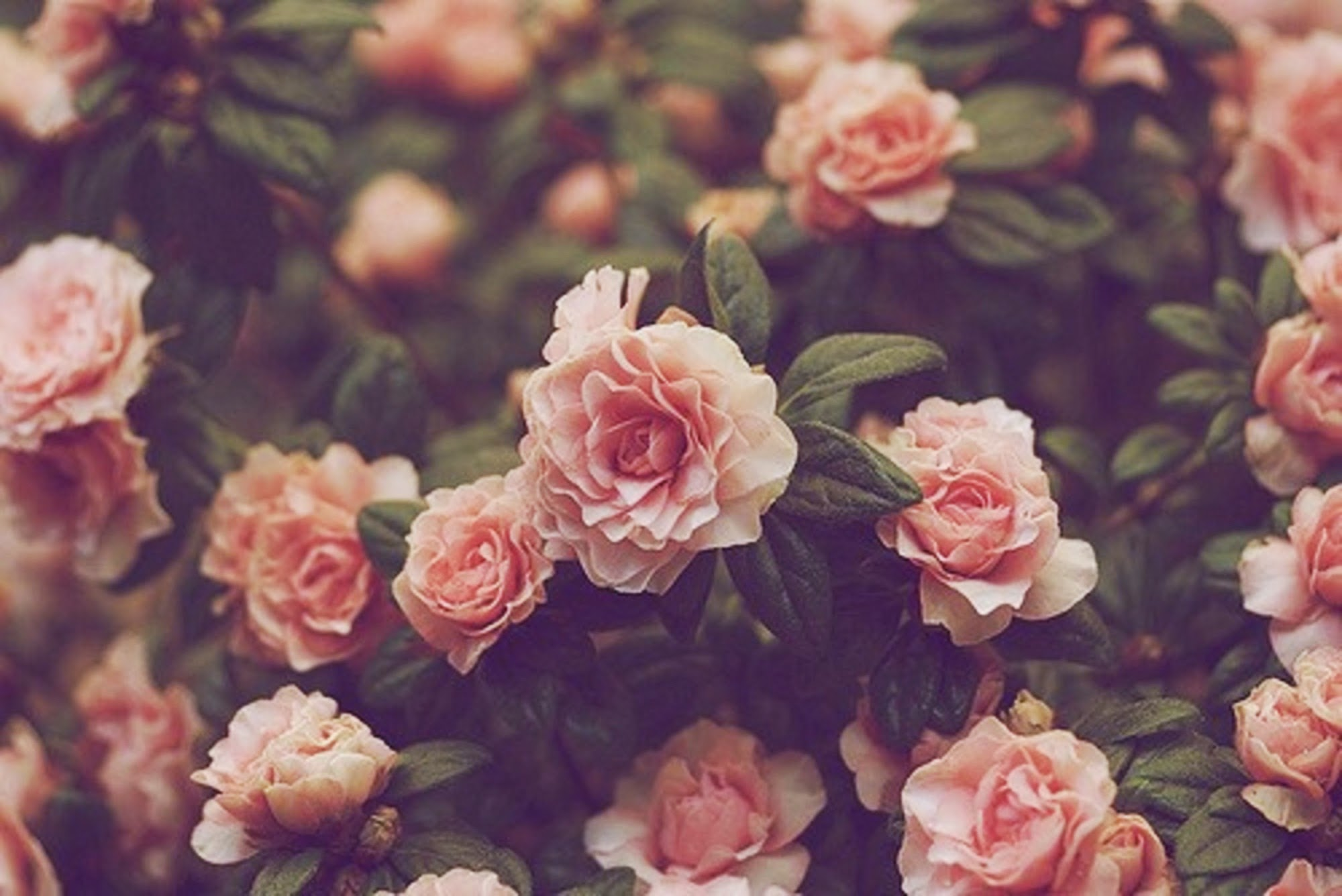 Collection of Floral Wallpaper Tumblr on HDWallpapers