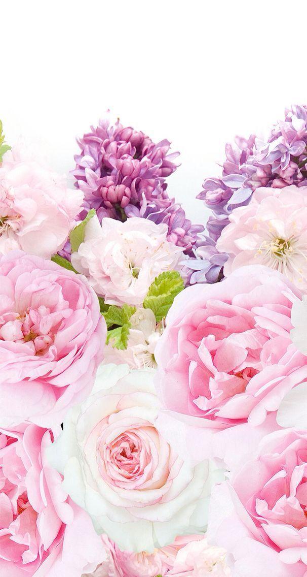 Flower Background Iphone 7 Best Flower Site