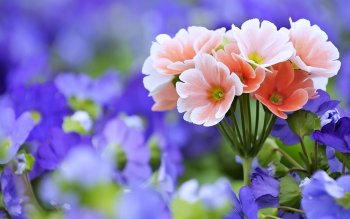 4762 Flower HD Wallpapers | Backgrounds - Wallpaper Abyss