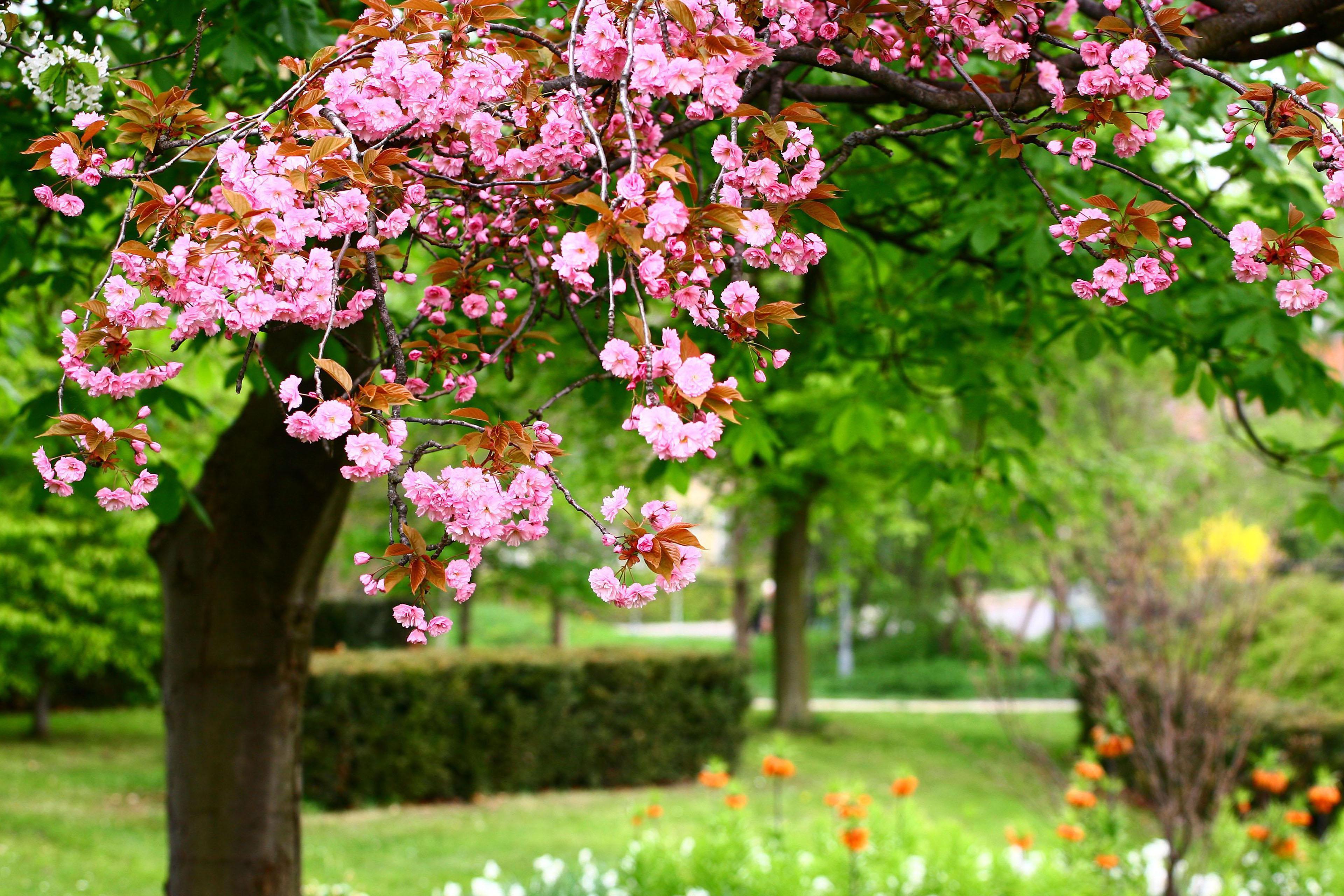 Flower Flower Garden Background Wallpaper