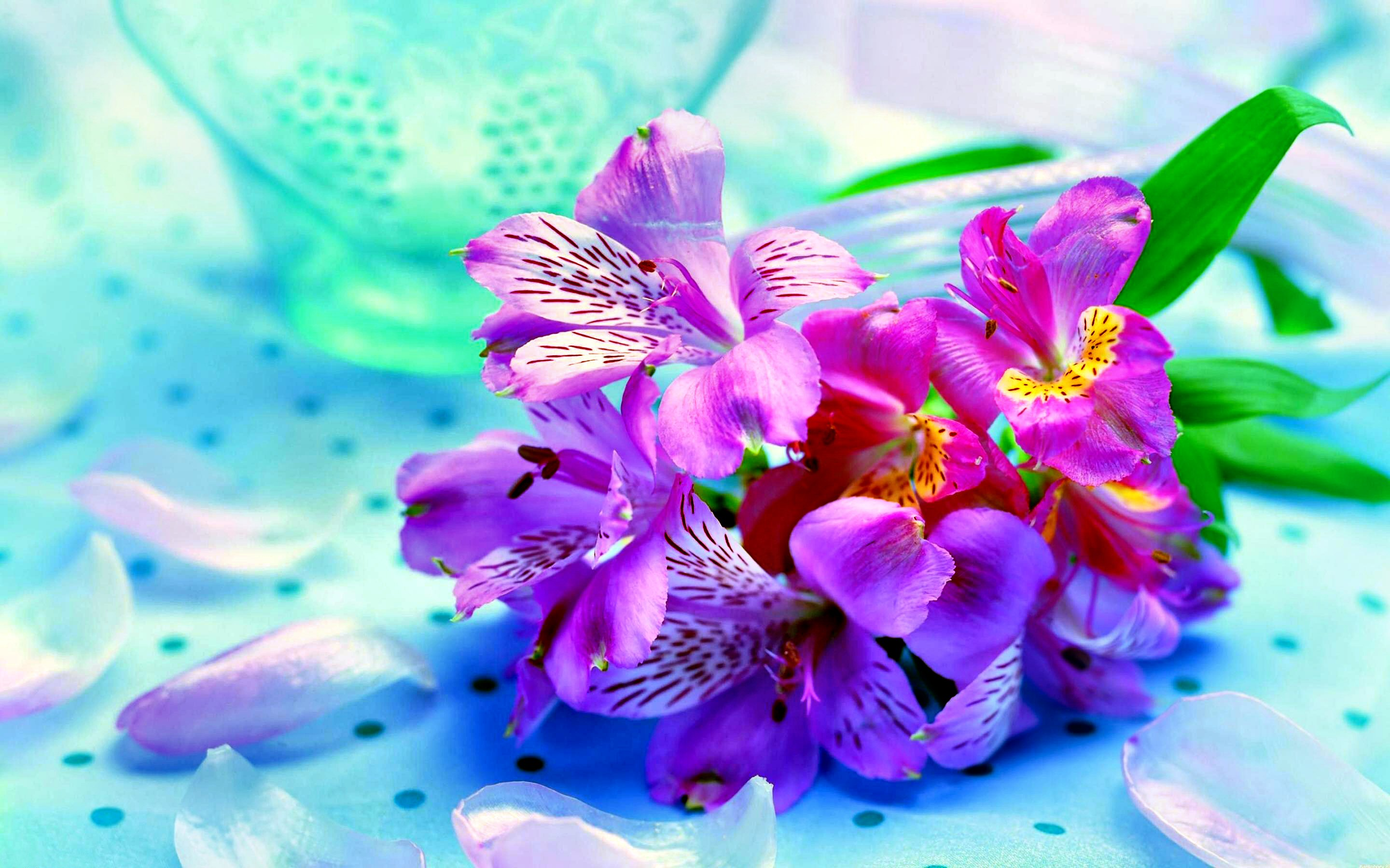 8889 Flower HD Wallpapers | Backgrounds - Wallpaper Abyss