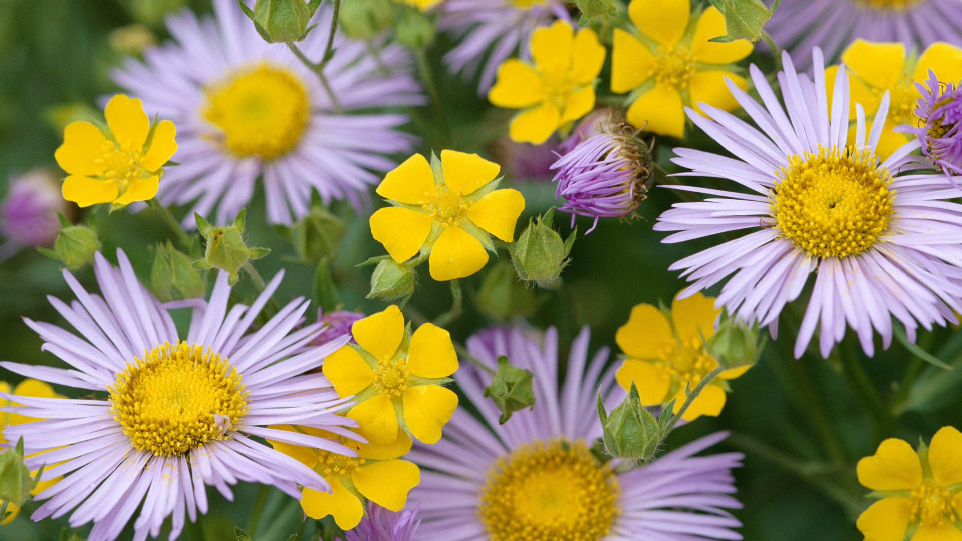 Flowers Hd Images Sf Wallpaper