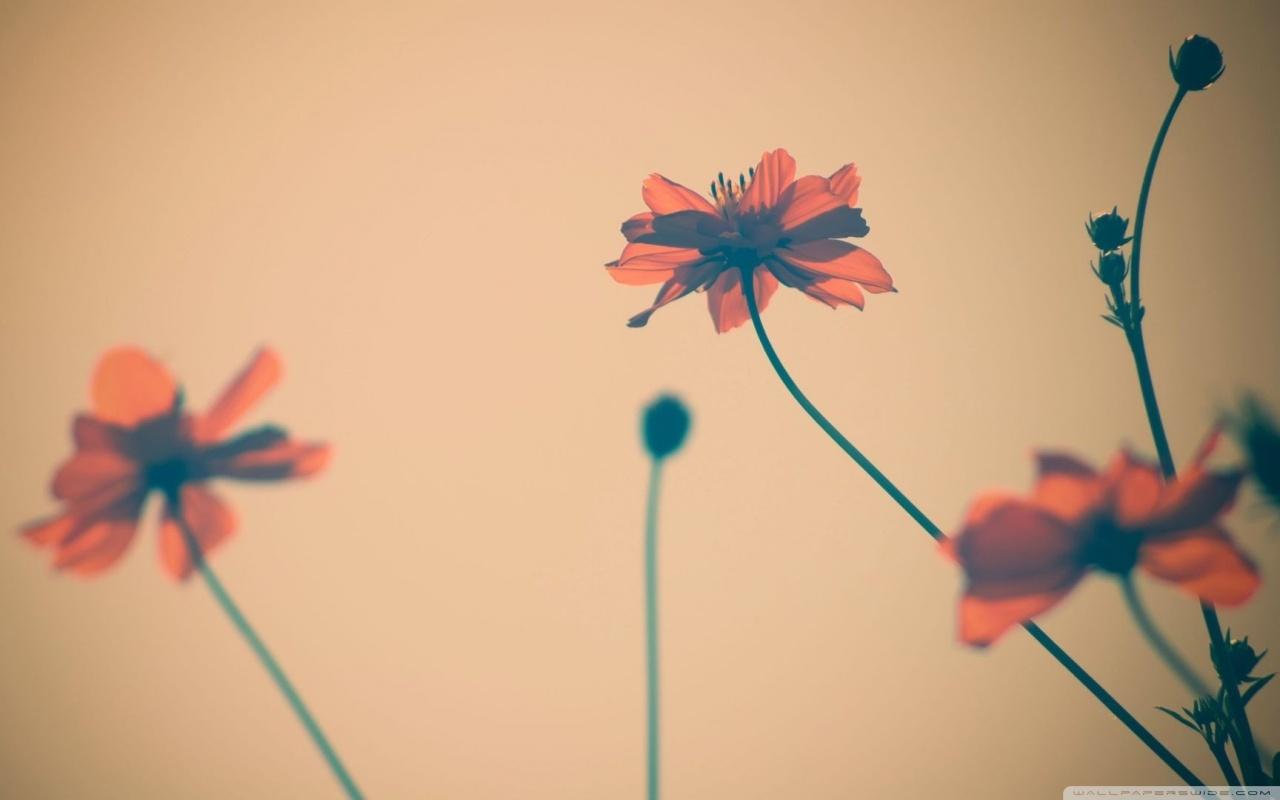 Flowers Tumblr HD desktop wallpaper : Widescreen : High Definition