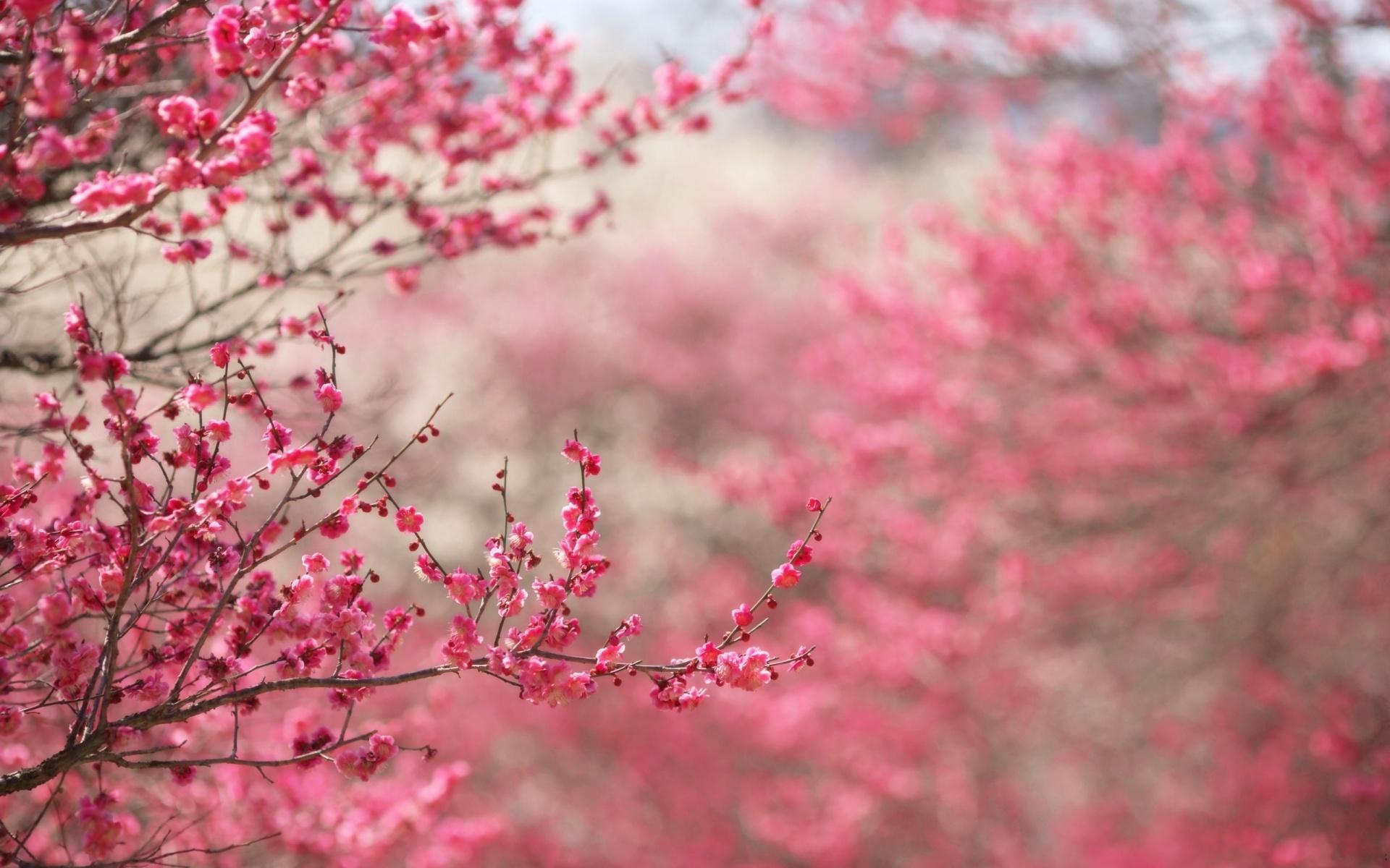 Flower Tumblr Wallpaper Widescreen - Excitelt com