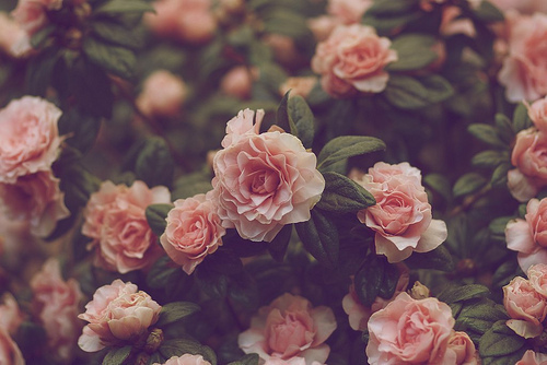 Collection of Flower Tumblr Wallpaper on HDWallpapers