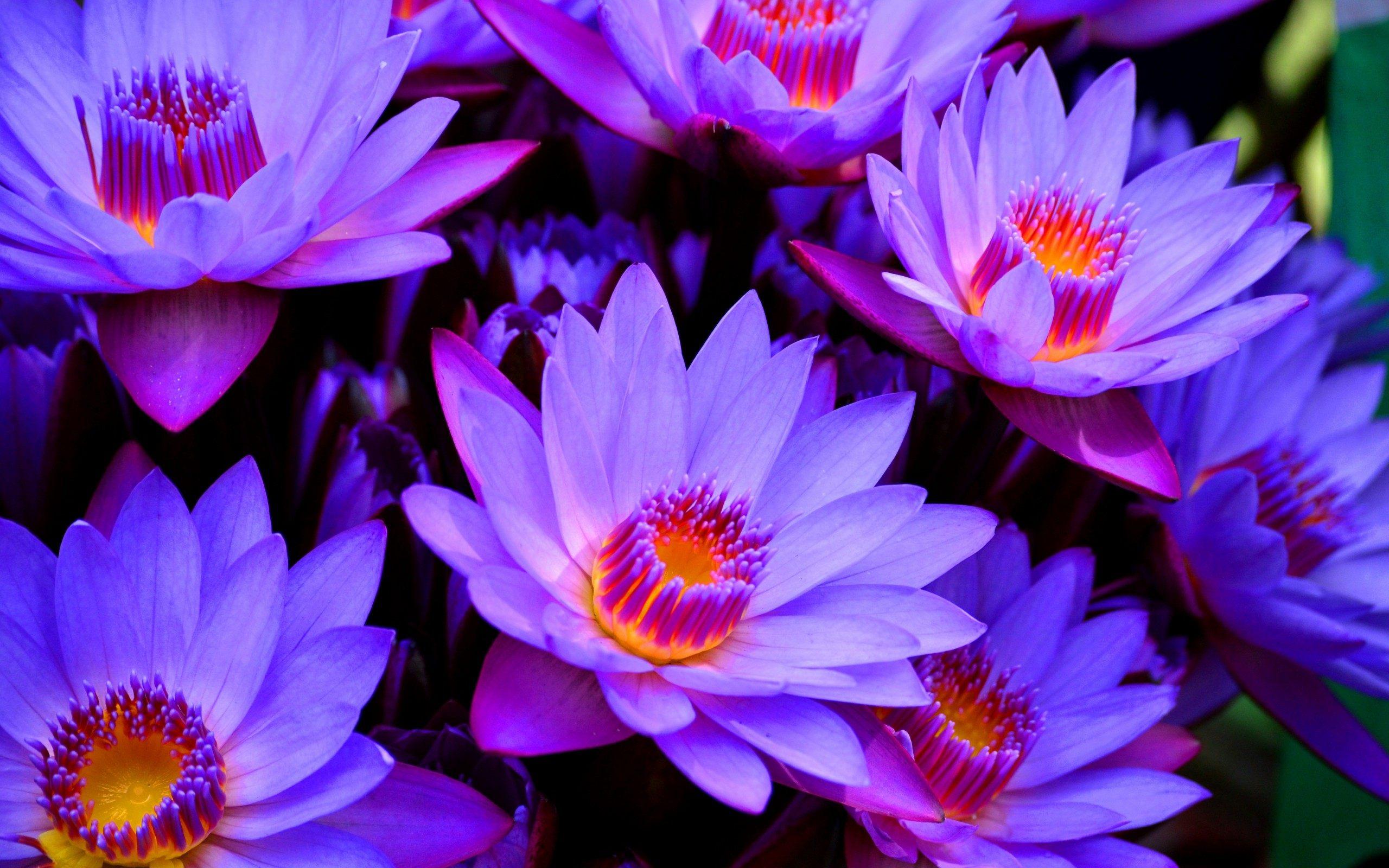 Flower Wallpaper Sf Wallpaper