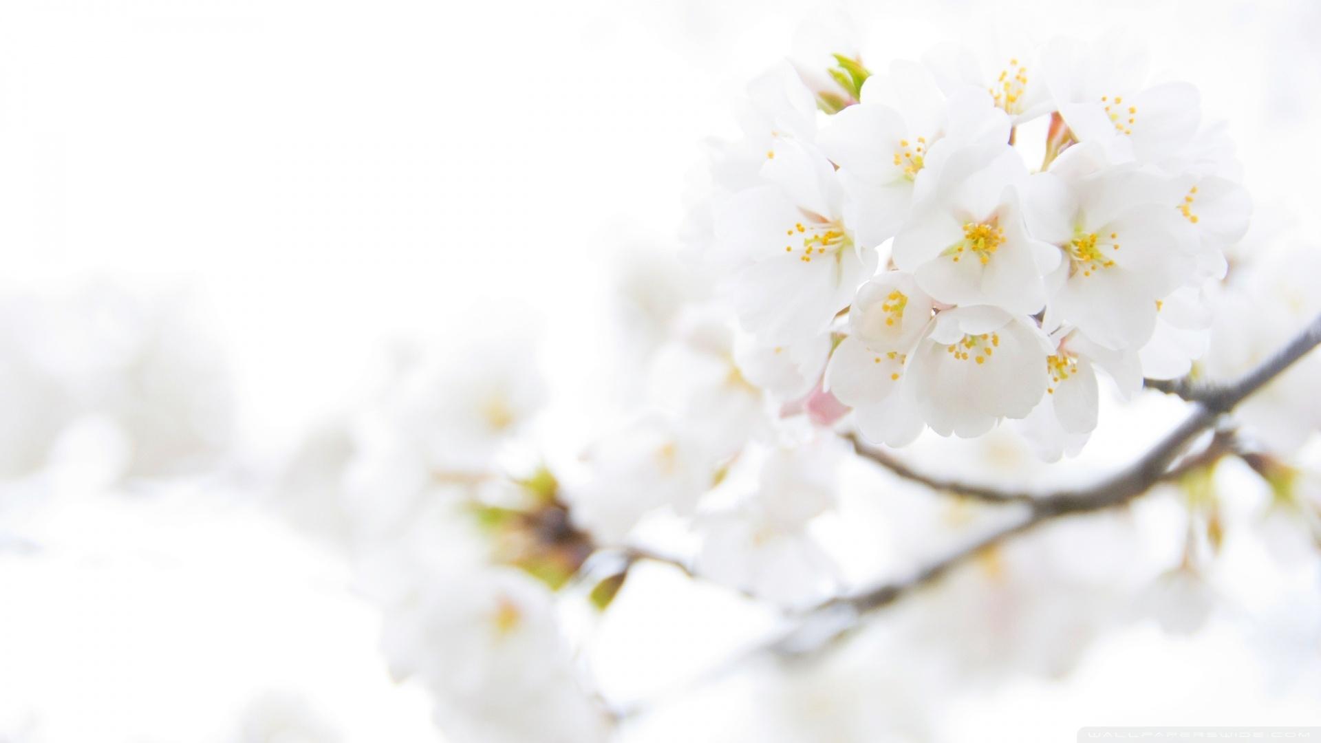 1000+ ideas about White Flower Wallpaper on Pinterest | White
