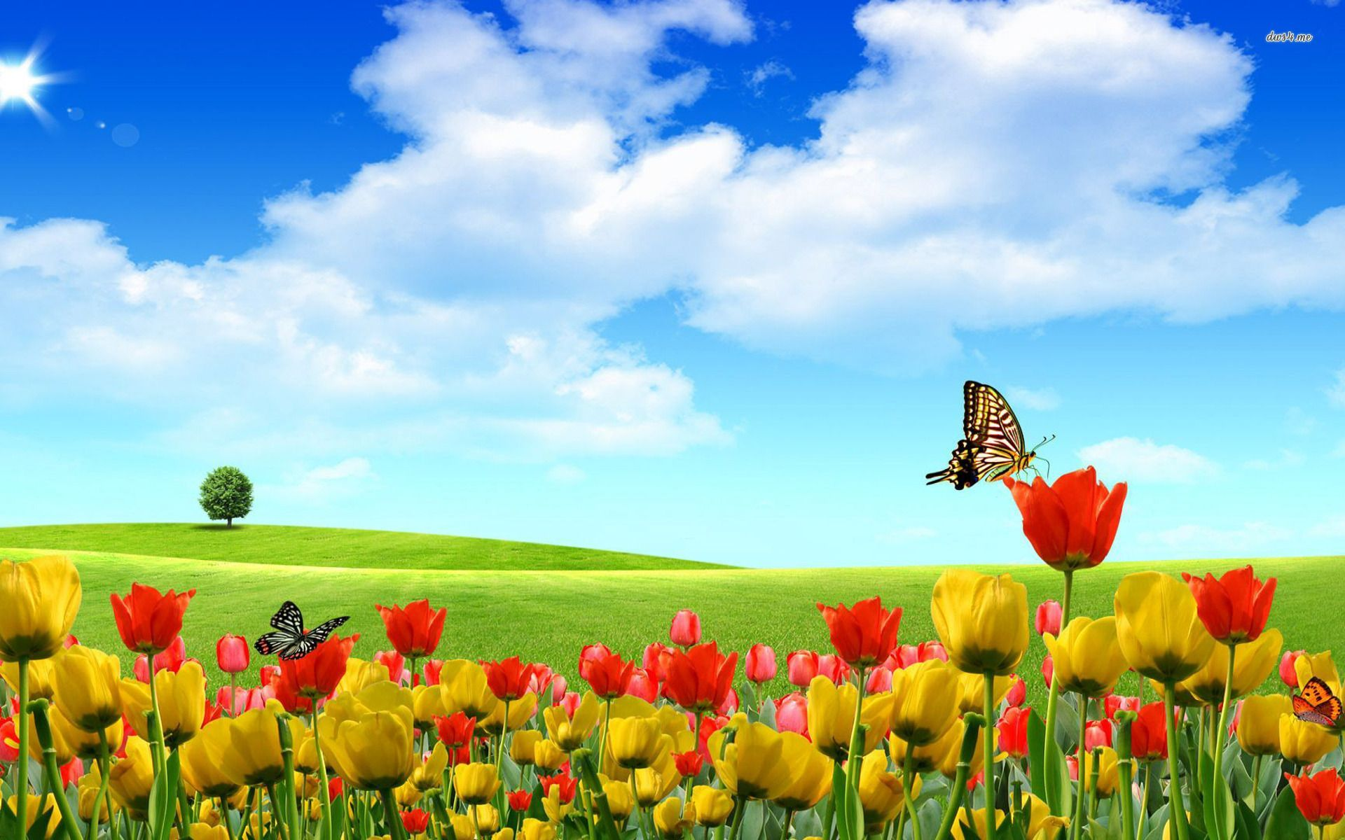 Butterfly And Flower Wallpapers - Wallpaper Cave