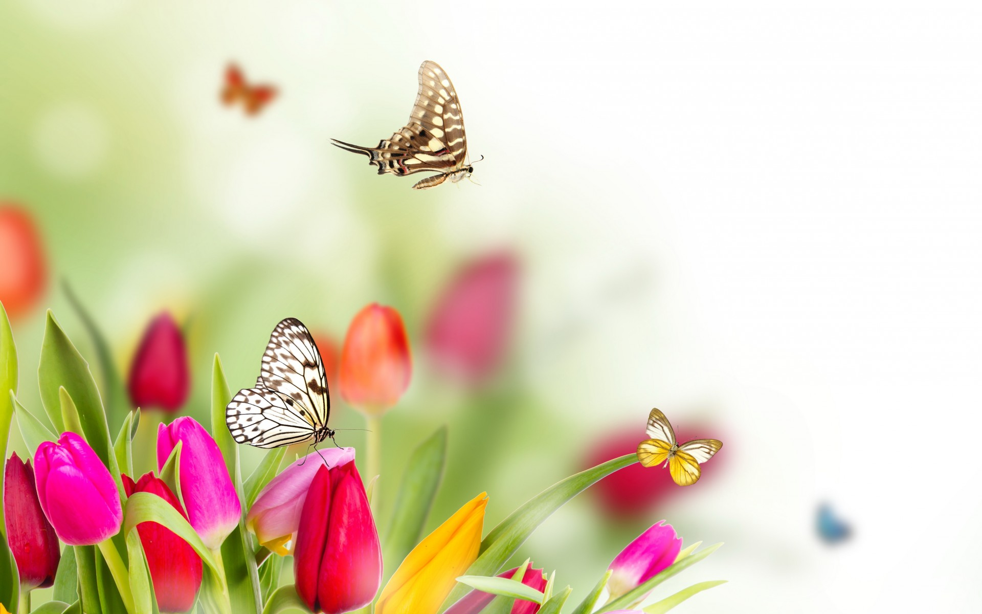 Spring flower background sf wallpaper collection of flowers and butterflies wallpaper on hdwallpapers mightylinksfo
