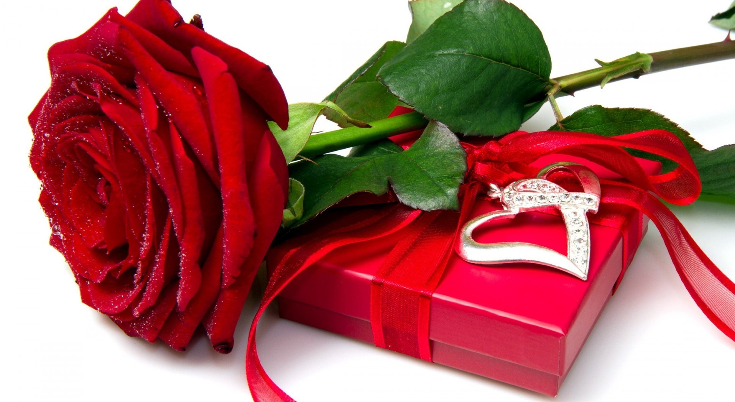 Wallpaper Flower Rose Love - WallpaperSafari