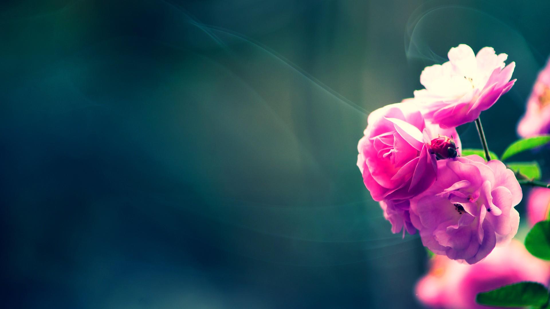 1000+ ideas about Hd Flower Wallpaper on Pinterest   Spring