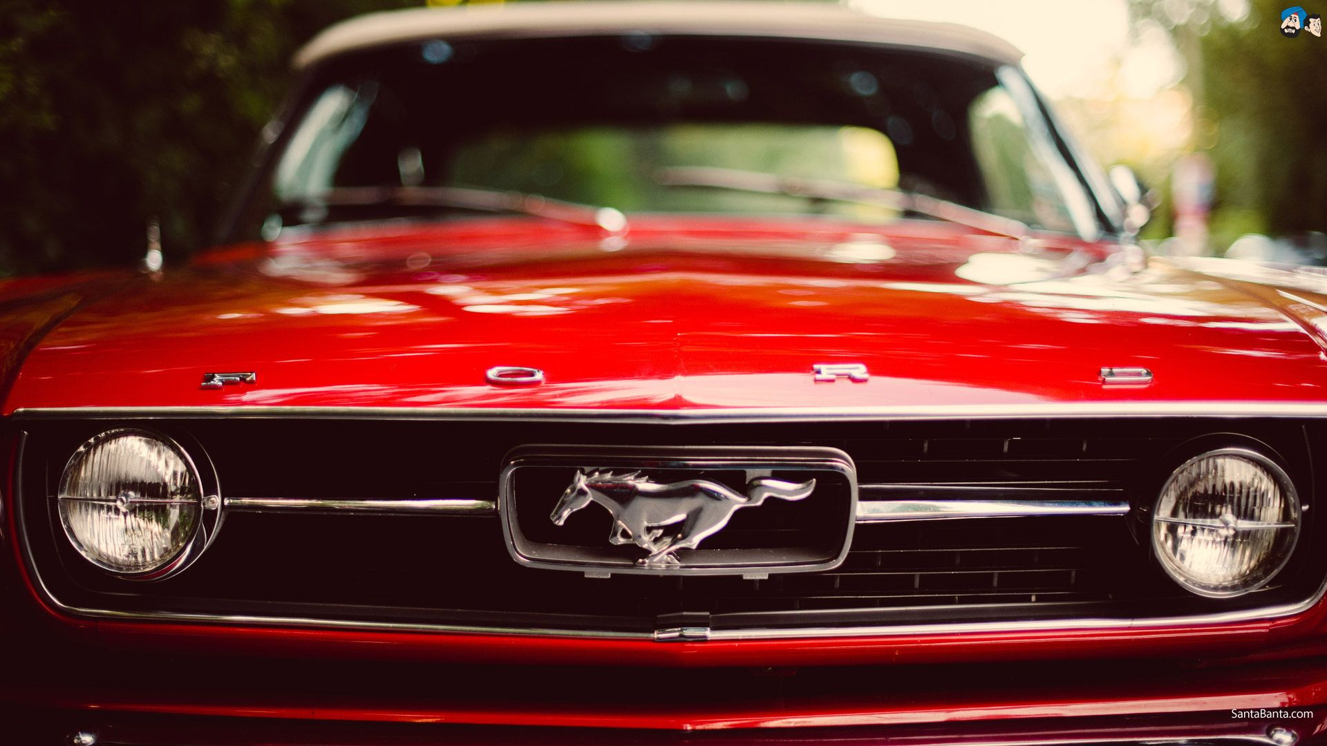 Collection of Ford Mustang Wallpaper on HDWallpapers
