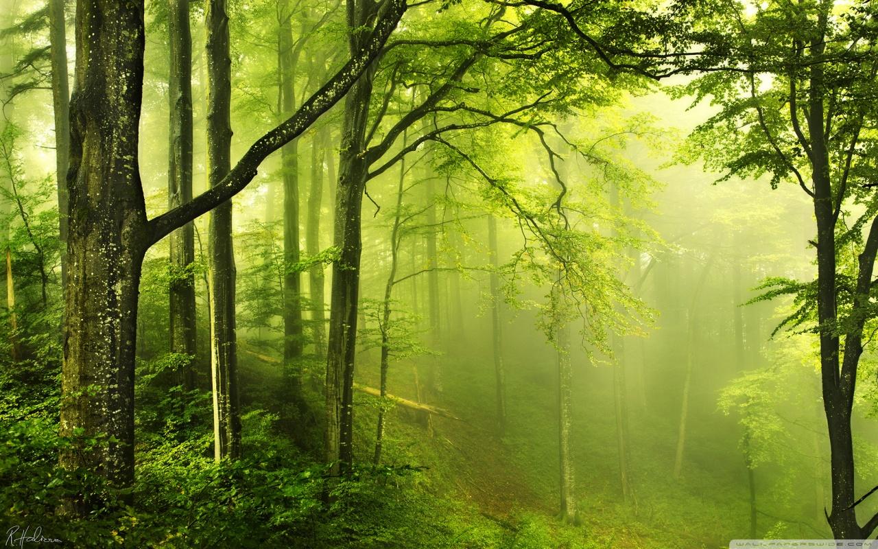 Beautiful Green Forest HD desktop wallpaper : High Definition