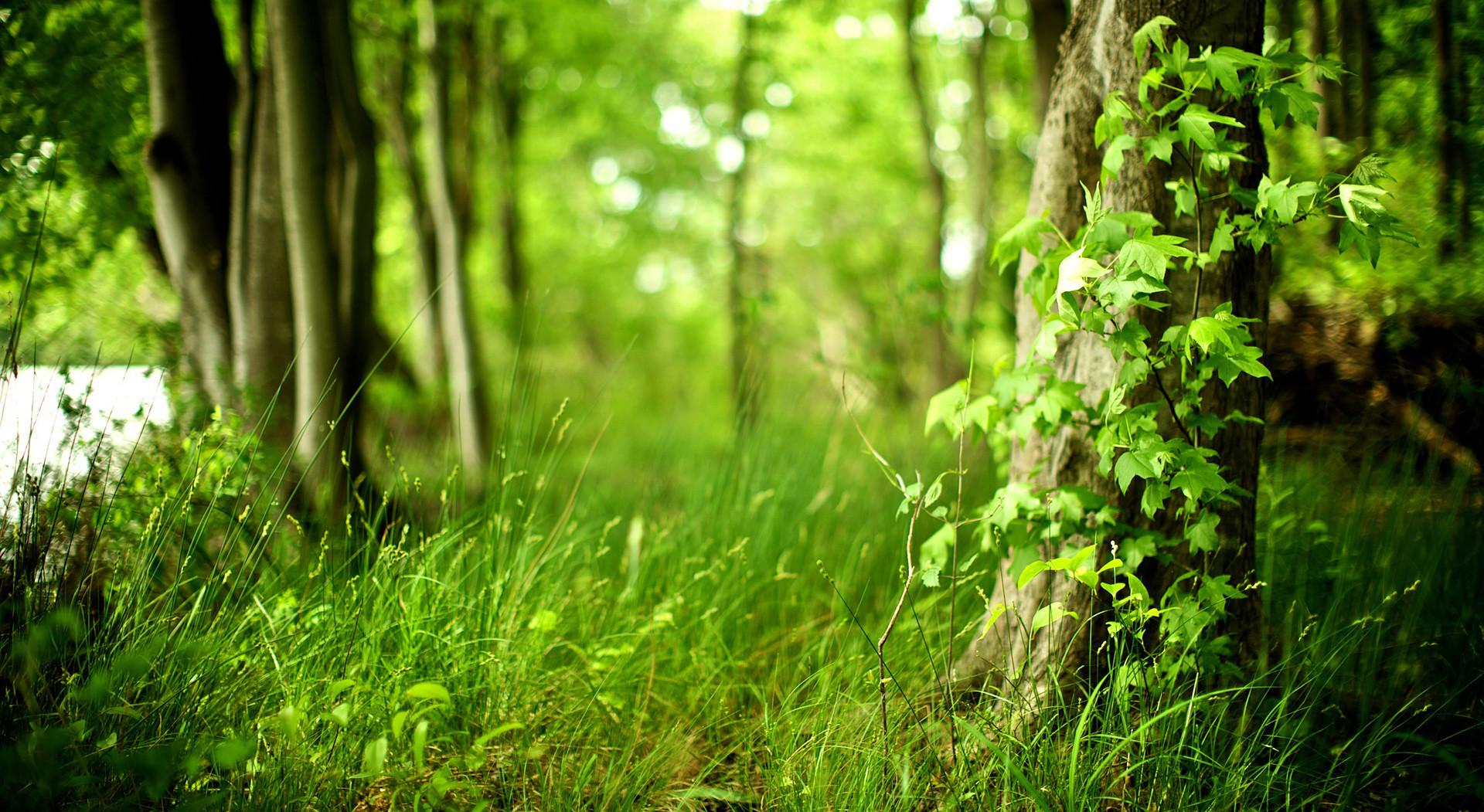 Forest Desktop Wallpapers | 43 HD Wallpapers, HD Pics