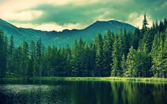Forest Wallpapers | Free Forest Desktop Wallpaper Desktop
