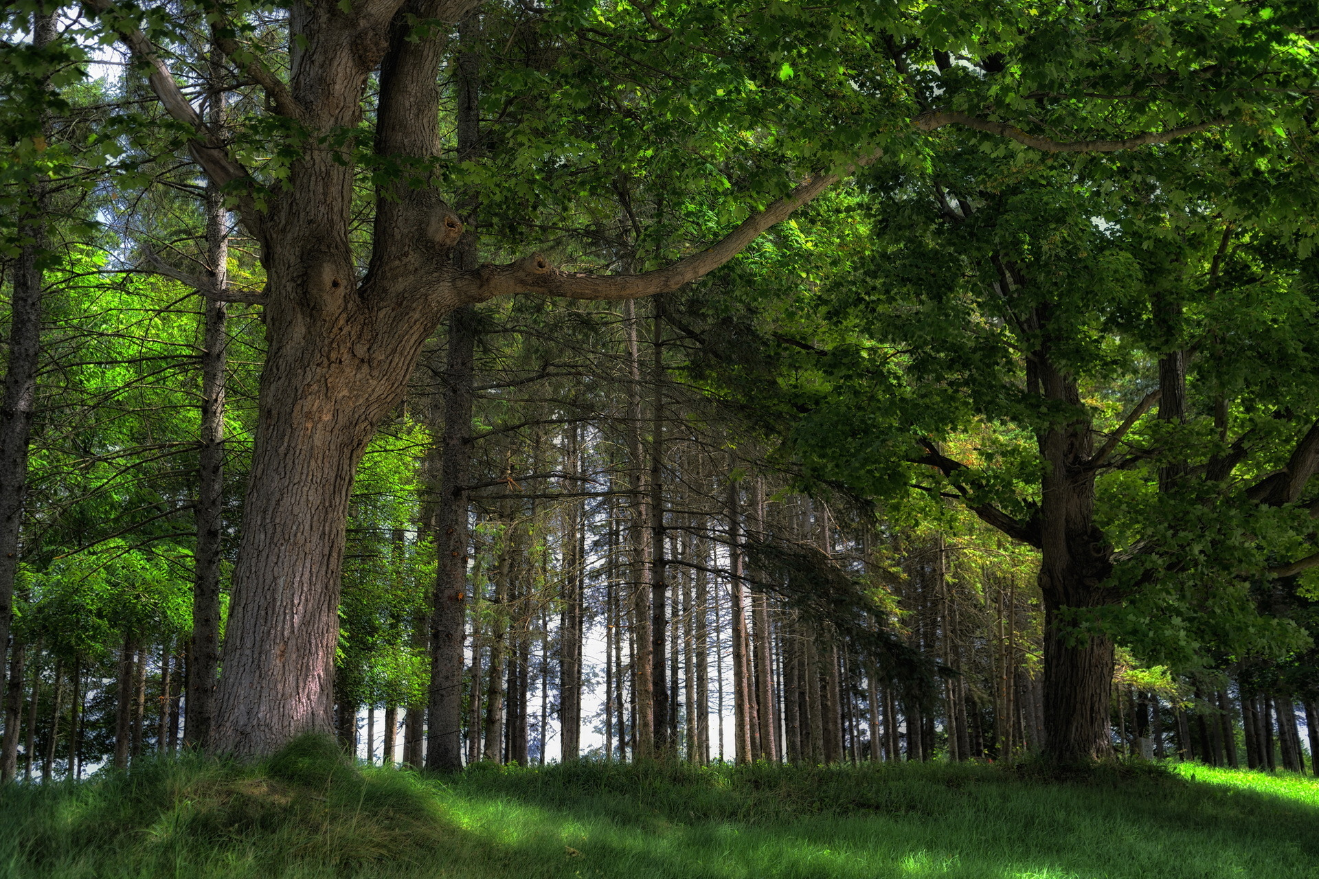 Cool Nature Desktop Backgrounds: Free Spring Forest 4K Ultra HD