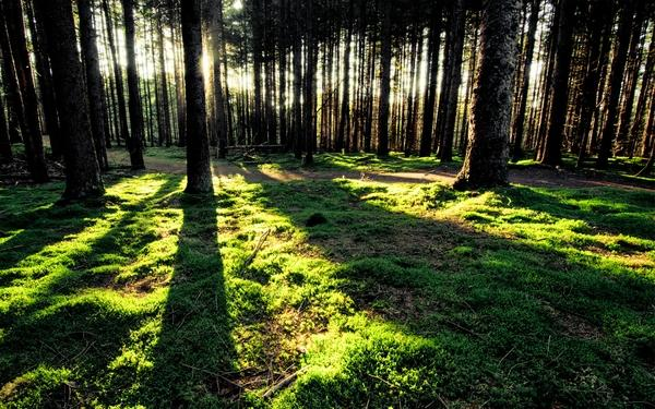 trees,forest trees forest sunlight 1920x1200 wallpaper – Trees