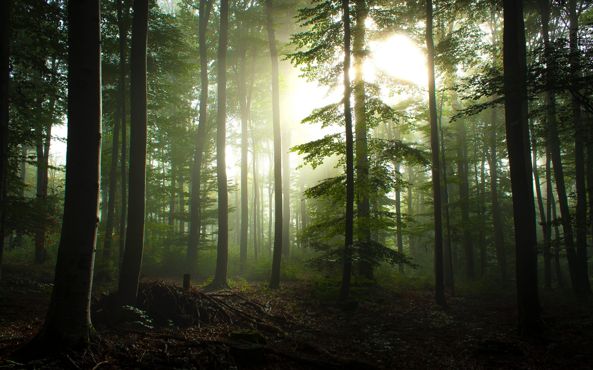 Forest Wallpapers High Quality | Download Free