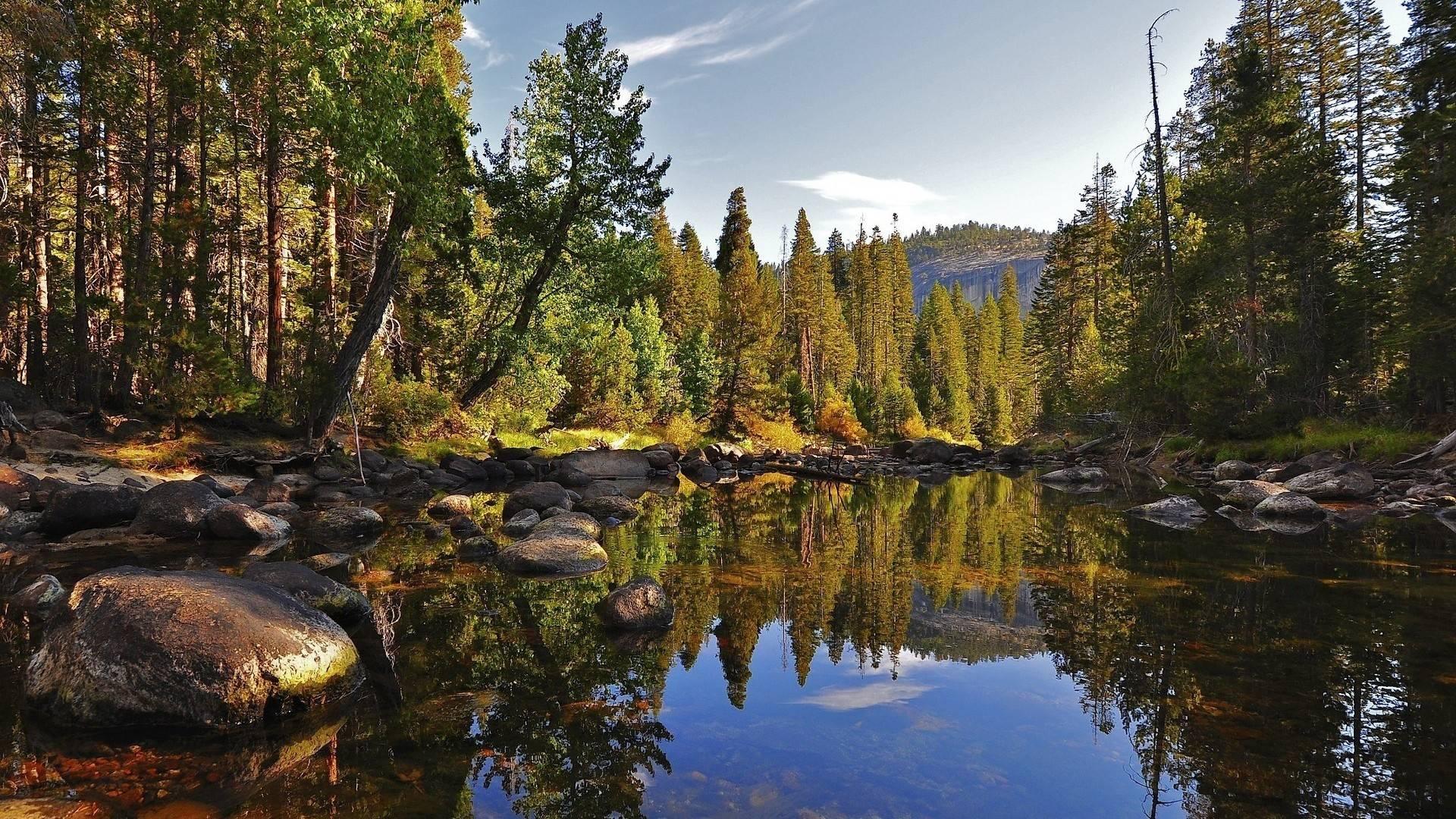 Forest Desktop Backgrounds Free Group (79+)